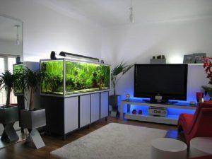 aquarium design for living room best