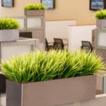 Creativity of Decorative Grasses
