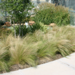 ornamental grasses border