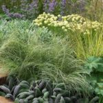 ornamental grasses border design